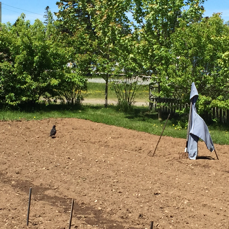 An Ineffective Scarecrow